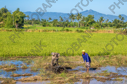 Philippines-ABD-525414 