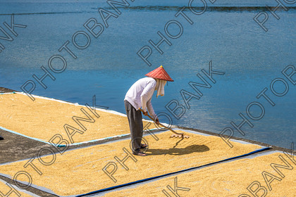 Philippines-ABD-525462 