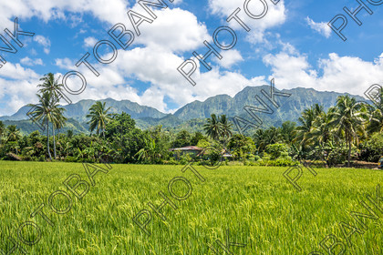 Philippines-ABD-525465 