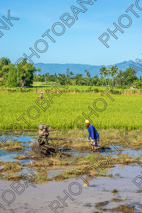 Philippines-ABD-525416 