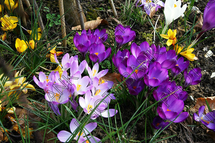 England-PBD417633 