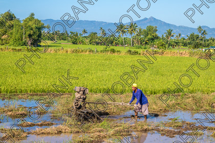 Philippines-ABD-525415 