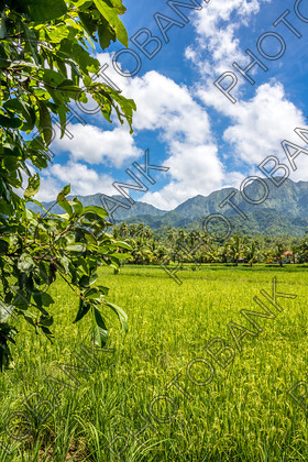 Philippines-ABD-525472 
